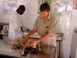 Veterinary internship abroad