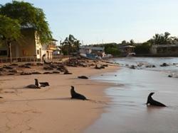 Volontär i Ecuador - Åk till Galapagosöarna!